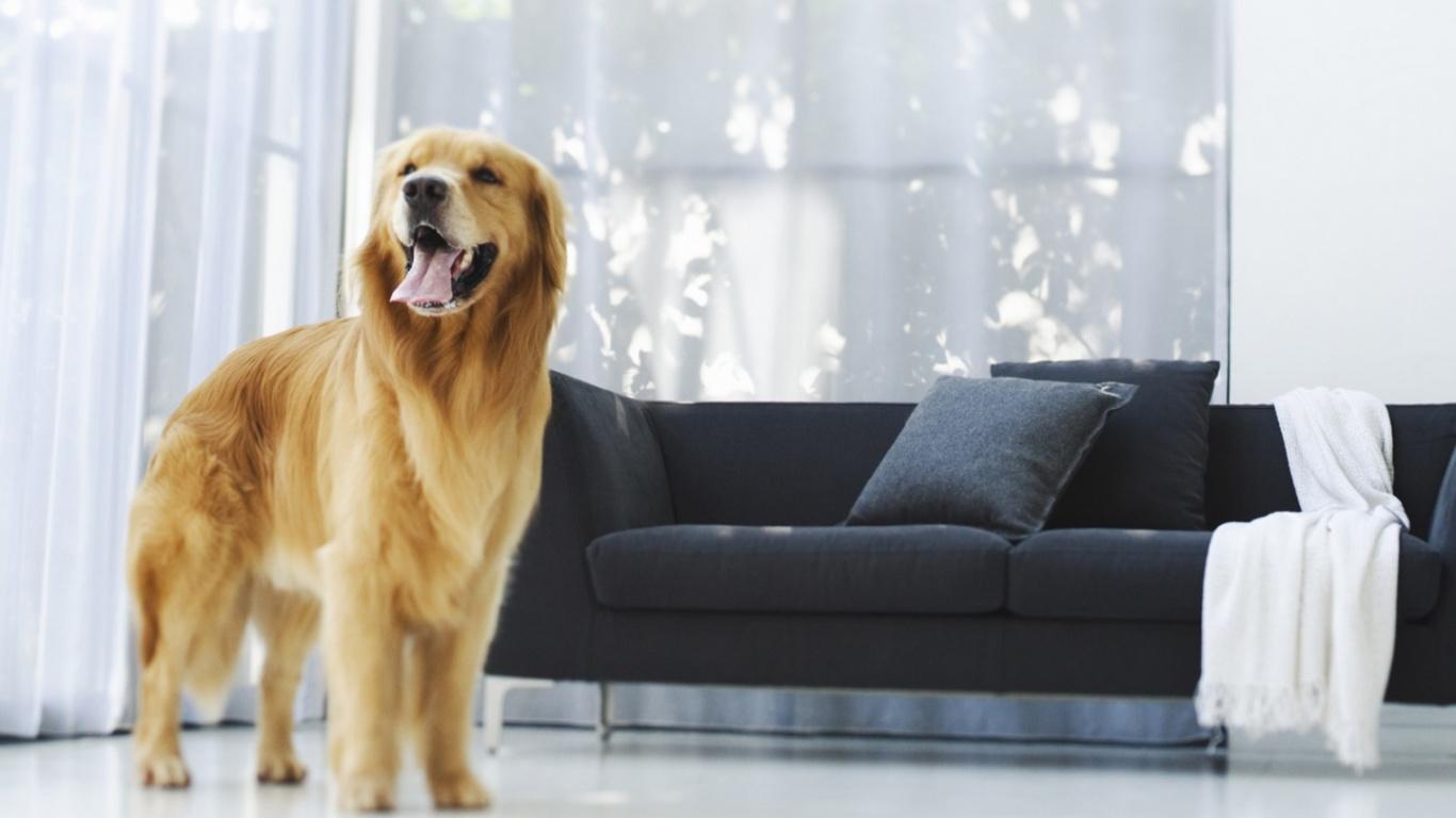 собака, животное, дом, питомец